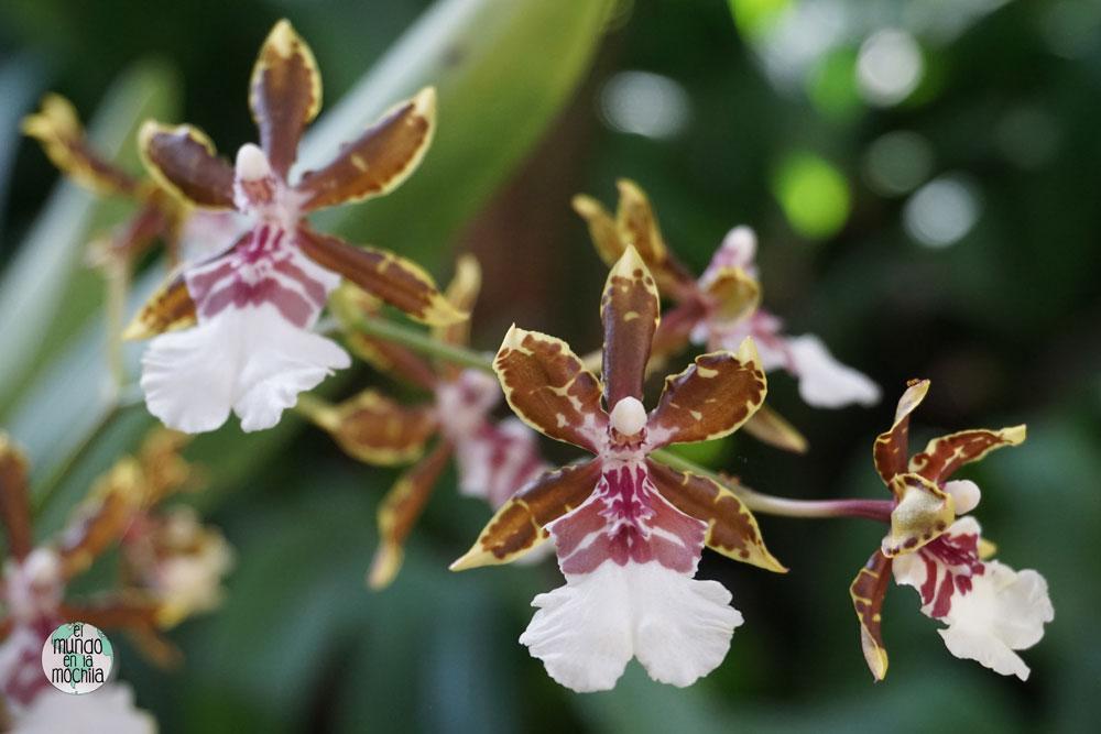 orquidea-jardin-botanico-rio-de-janeiro-3
