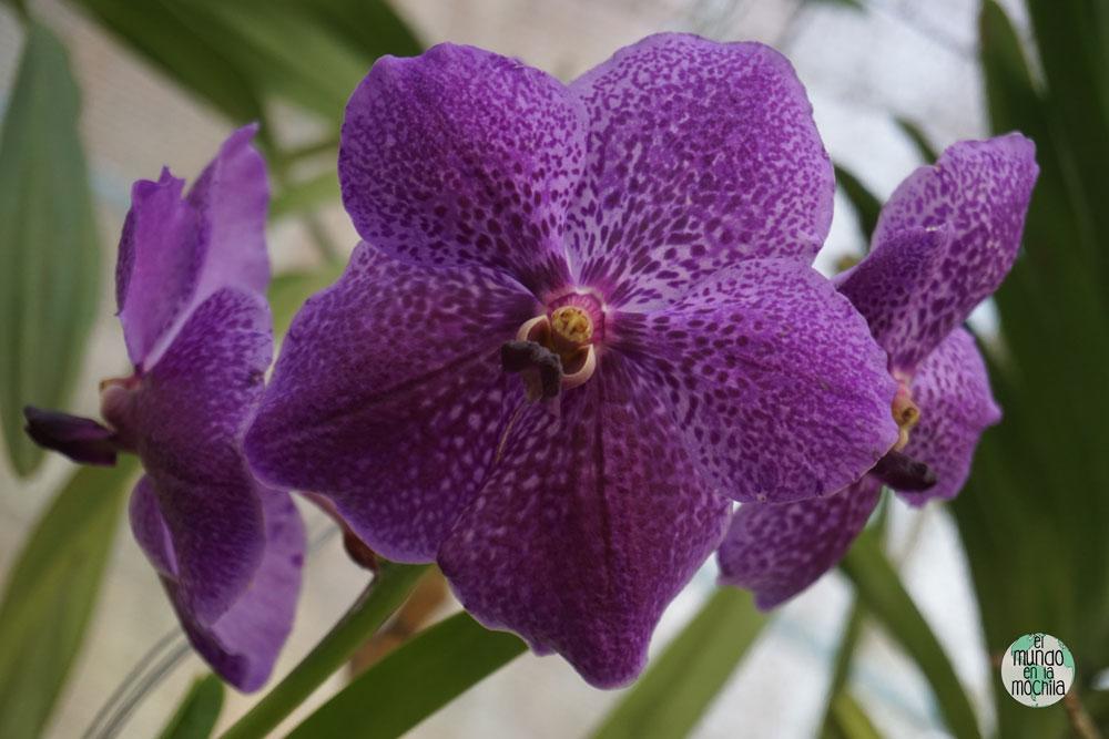 orquidea-jardin-botanico-rio-de-janeiro-4