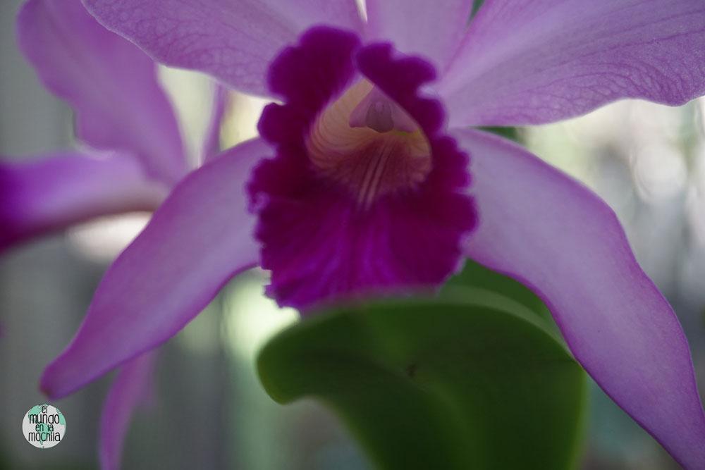 orquidea-jardin-botanico-rio-de-janeiro-5