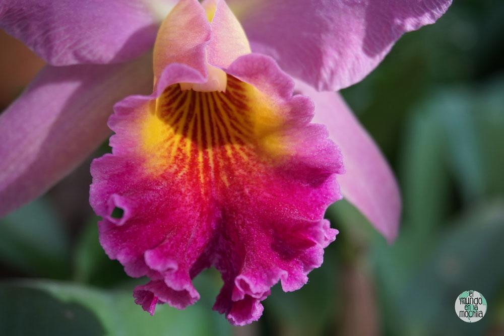 orquidea-jardin-botanico-rio-de-janeiro-2
