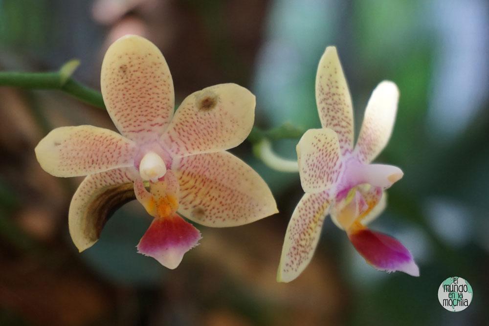 orquidea-jardin-botanico-rio-de-janeiro-7